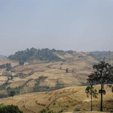 gamoji
